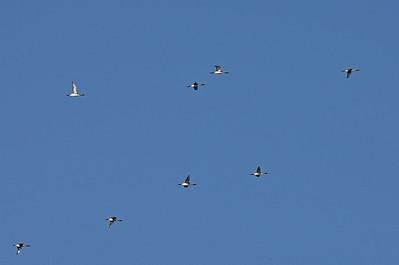 28.5.2012 Kirkkonummi, Finland