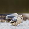 The snake and I go eyeball-to-eyeball