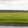 Panorama from observation deck on the main entrance road to Mattamuskeet.