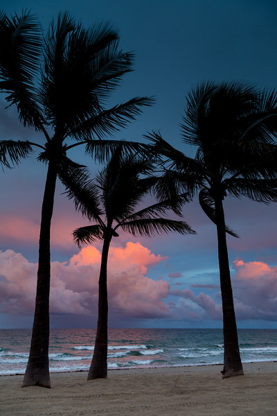 """Moody Palms"""