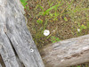 No, not a discarded coffee cup lid, but a temperature reader.<br /> Experimental Least Tern Nesting Barge <br /> Ellis Bay <br /> Riverlands Migratory Bird Sanctuary<br /> Photo by US Army Corps of Engineers - Rivers Project Office