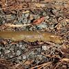 Banana Slug 039