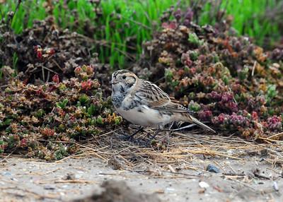 Fiesta Island, Mission Bay, San Diego, CA 10/25/2010