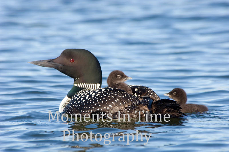 Loon mother of two