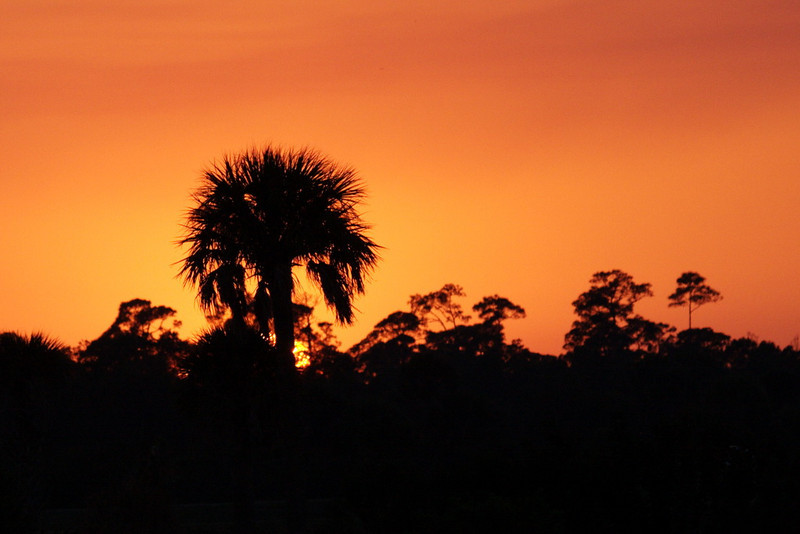 2760 A lone pine tree, usually a green beauty, now a black beauty, stands unmoved as the sun closes the curtain on us photographers in Viera and opens the curtain for early rising photographers halfway around the world. Good-bye, Sun. See you tomorrow.