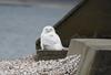 Same owl closer up