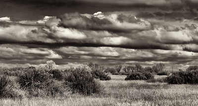 """Savannah"" habitat, Mather Regional Park, 2-19-14. 2 image photomerge, converted to black and white."