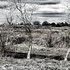 """Bomb Pool"" vernal pool, Mather Regional Park, 2-19-14. 3 image photomerge, converted to black and white with some color remaining."