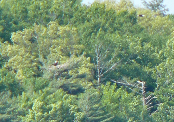 Eagle nest at Quittacas