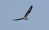 Osprey at Winsegansett
