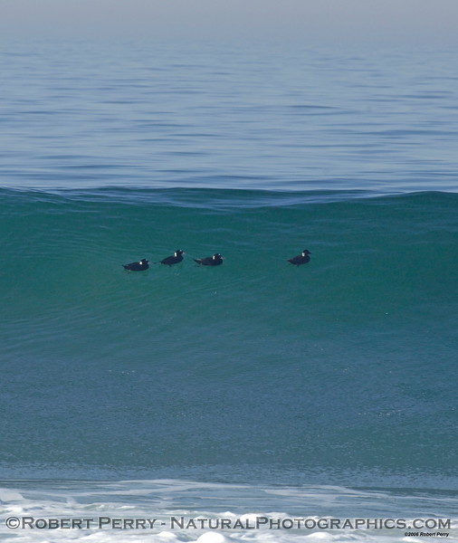 Four scoters riding high.