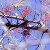 BRTH_1-  Boyce Thompson Arboretum AZ  12-28-03
