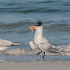 Terns-What to Do?