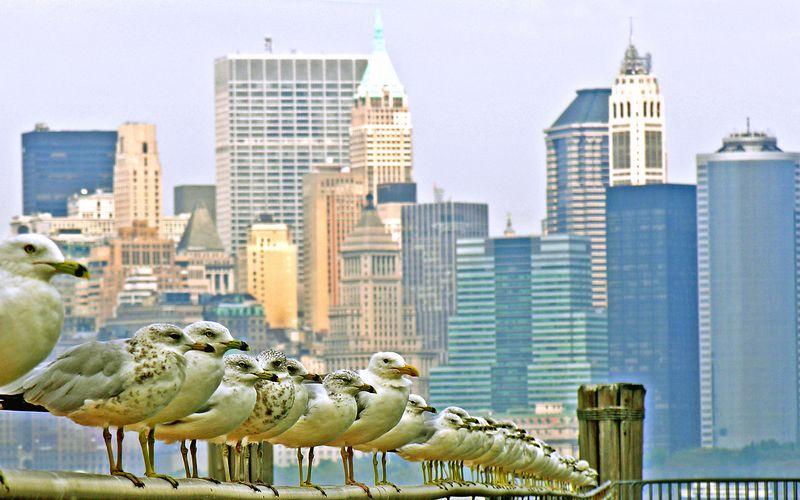 Birds Eye View of Manhattan<br /> Taken from Liberty Island