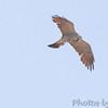 "Birds of Prey: Kites: <span style=""color:#fff; background:#333;"">Mississippi Kite</span>  <br> Weldon Spring Site Interpretive Center Prairie <br> <a href=""/Birds/2006-Birding/Birding-2006-July-August/2006-08-15-Weldon-Spring-Site/i-Wsg6khh"">2006-08-15</a> <br><br>  My 1st Missouri photo, species #125 <br> 2006-08-15 11:59:20 <br><div class=""noshow"">  See #125 in photo gallery  <a href=""/Birds/2006-Birding/Birding-2006-July-August/2006-08-15-Weldon-Spring-Site/i-Wsg6khh""> Here</a> </div>"