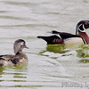 "Ducks: <span style=""color:#fff; background:#333;"">Wood Ducks</span>  <br><span class=""showLBtitle"">                                                                                          </span> Male and Female pair <br> Tower Grove Park <br> St. Louis, Missouri <br> <a href=""/Birds/2007-Birding/Birding-2007-May/2007-05-01-Tower-Grove-Park/i-p98mfCx"">2007-05-01</a> <br> <br> My 1st Missouri photo, species #38 <br> 2005-10-08 15:18:38 <br> <div class=""noshow"">See #38 in photo gallery <a href=""/Birds/2005-Birding/2005-10-08-Creve-Coeur-Lake/i-b2qBfDw"">Here</a></div>"