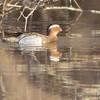 "Ducks: <span style=""color:#fff; background:#333;"">Garganey</span>  <br><span class=""showLBtitle"">                                                  </span> West of Sumner besides hwy 139 <br> Chariton County, Missouri <br> <a href=""/Birds/2013-Birding/Birding-2013-April/2013-04-20-Garganey/i-bXgzZ6f"">2013-04-20</a> <br> <br> My 1st Missouri photo, species #326 <br> <span style=""color:#fff"">*** 2nd Missouri record ***</span> <br> 2013-04-20 07:20:00 <br> <div class=""noshow"">See #326 in photo gallery <a href=""/Birds/2013-Birding/Birding-2013-April/2013-04-20-Garganey/i-tRPf5Ls"">Here</a></div>"
