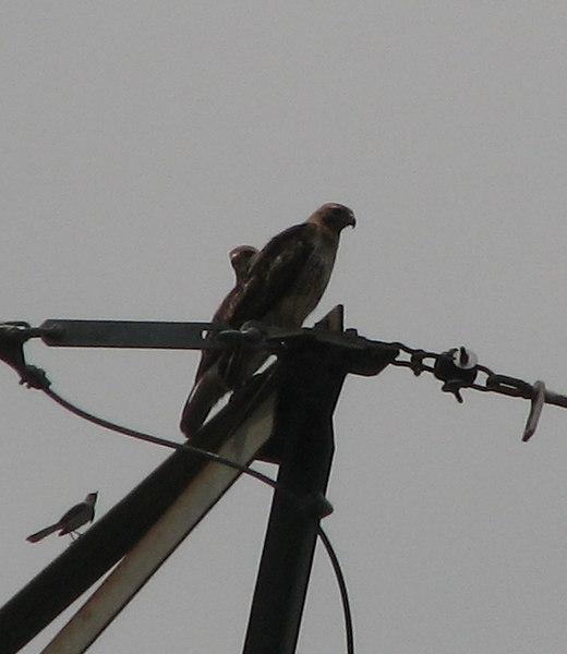 02 Bravest Little Bird on the Planet