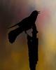 9215c_031413_183610_7DL12 bird texture