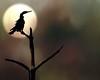7544f_031413_152122_7DL12 bird texture