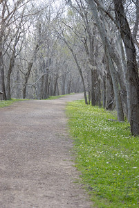 Trail at Brazos Bend State Park - February