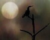7544g_031413_152122_7DL12 bird texture