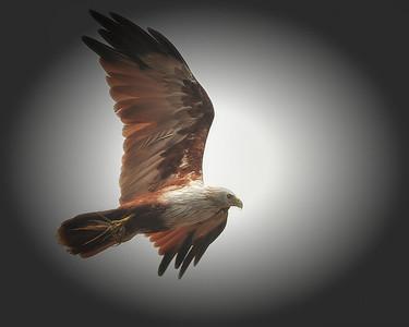 Most recent birds