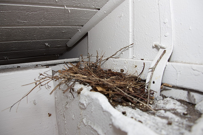 08 May 10, this afternoon all I saw was an empty nest. Where did the doves go?