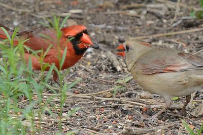 Cardinal Family Mealtime