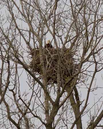 New Eagle's Nest 04.18.13