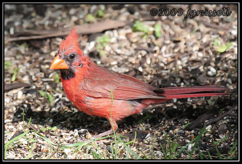 Dad, molting and unhappy