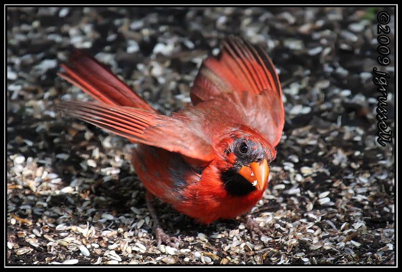 Warning away other birds