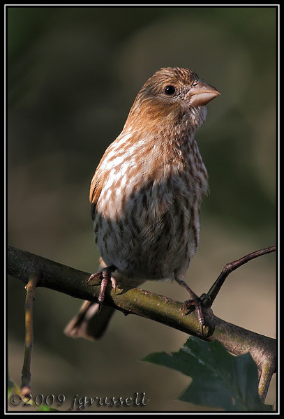 Afternoon finches: 1