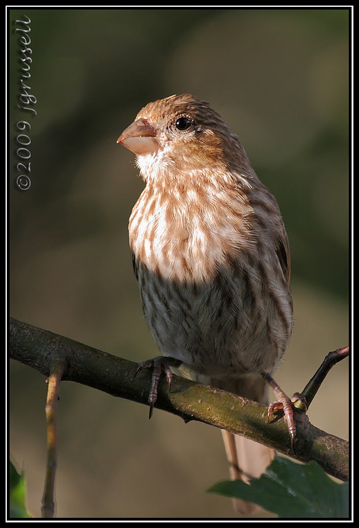 Afternoon finches: 2