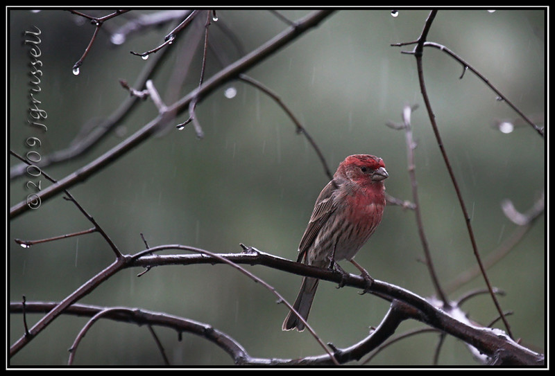 Rainy day finch