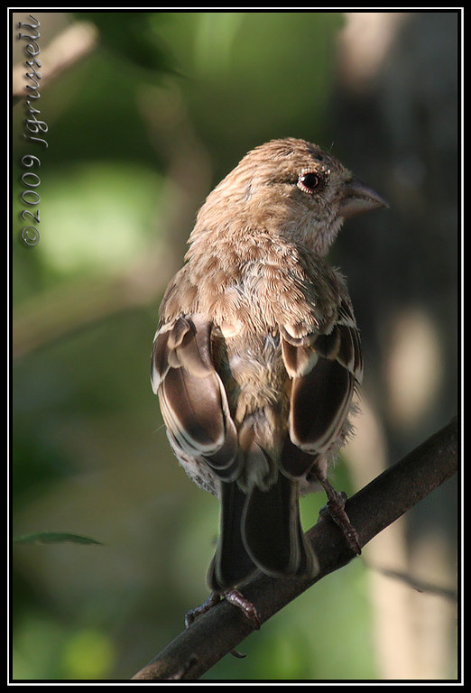 Afternoon finches: 4