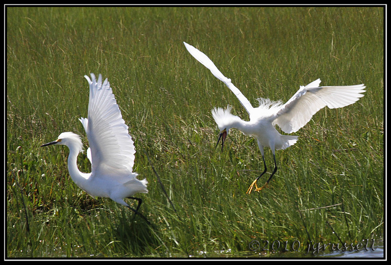 """And you too, curse it all!!""<br /> Forsythe NWR May 2010"