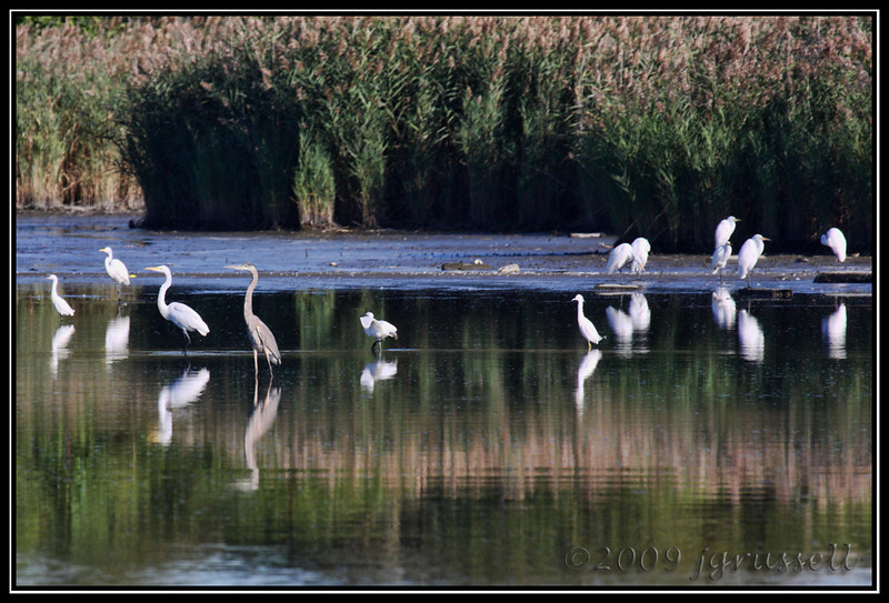 Herons and egrets oh my!