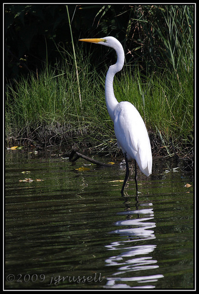 Egret<br /> DeKorte Park<br /> NJ Meadowlands