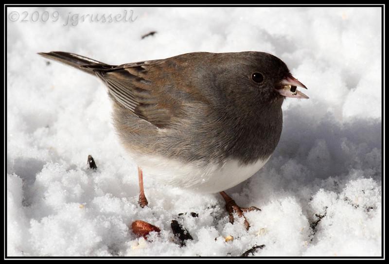 Snowbird 1
