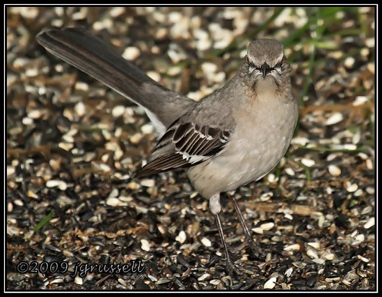 Bird with 'tude