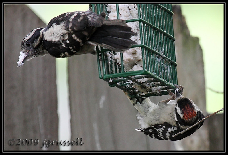 """See? It's easy! And now I have a lovely batch of suet for you."""