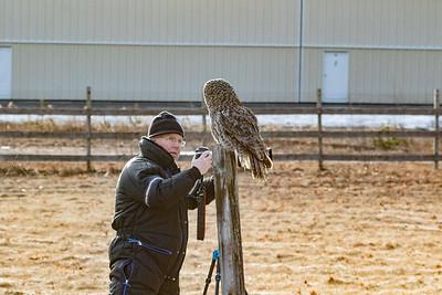 3-13-2017 Great Gray Owl 1727