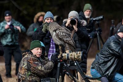 3-13-2017 Great Gray Owl 0486