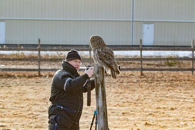 3-13-2017 Great Gray Owl 1726