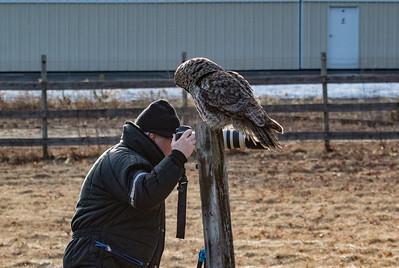 3-13-2017 Great Gray Owl 1720