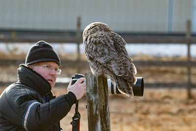 3-13-2017 Great Gray Owl 1728