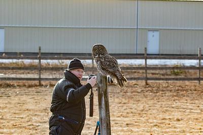 3-13-2017 Great Gray Owl 1723