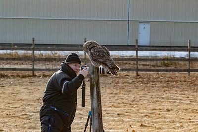 3-13-2017 Great Gray Owl 1721