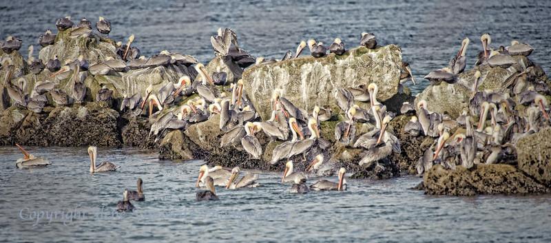Pelican Islands
